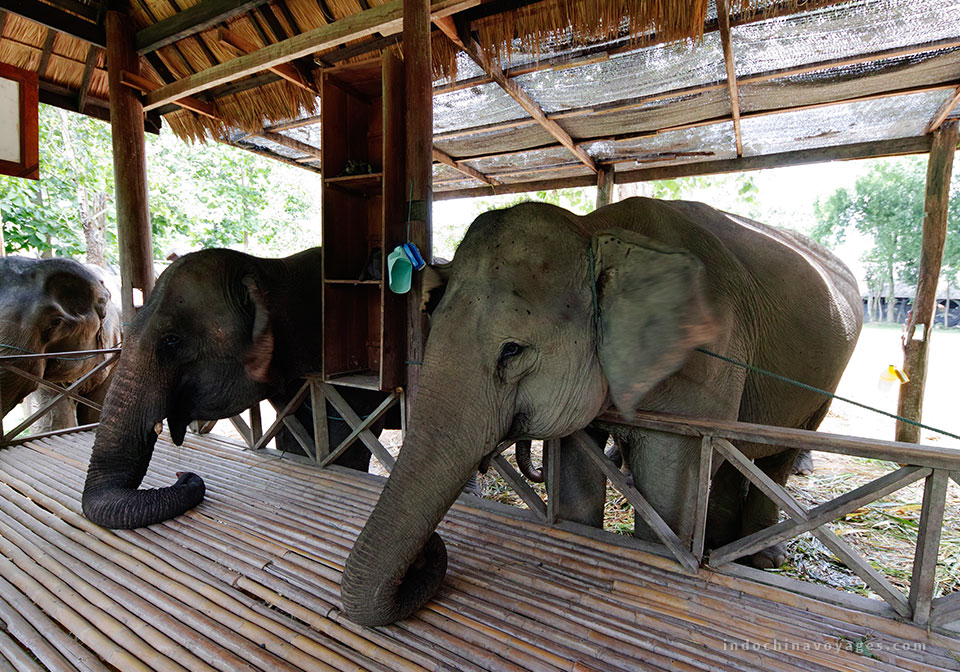 discover-the-elephant-in-laos