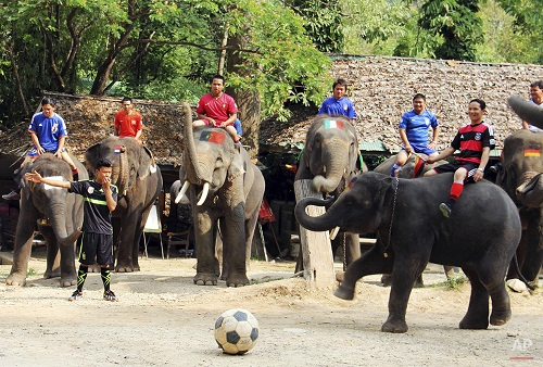 Elephant soccer game