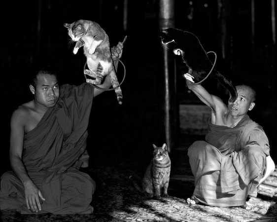 The jumping cat in Nga Phe Kyaung Monastery