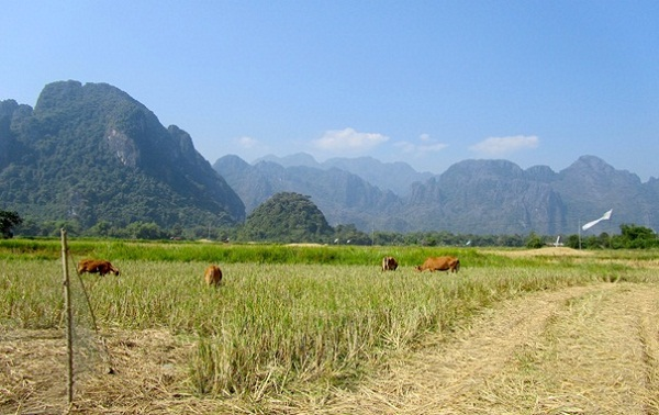 A peaceful scene of the quiet countryside in Vang Vieng