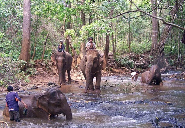 The elephants are being washed by their mahouts in the stream of Sen Monorom town