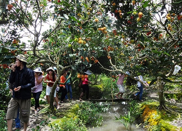 Tourists can buy delicious fruits at very cheap price on site or participate in harvesting them.