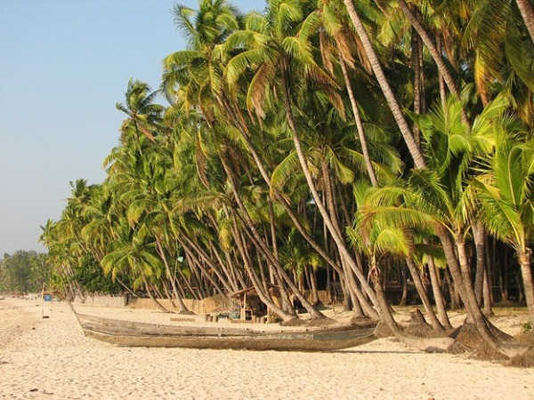 Coconut trees surrounding the seashore