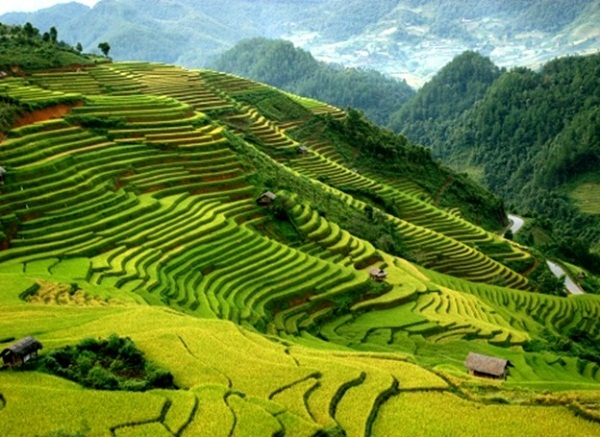 Paddy fields carpet the rolling lower slopes of the Hoang Lien Mountains