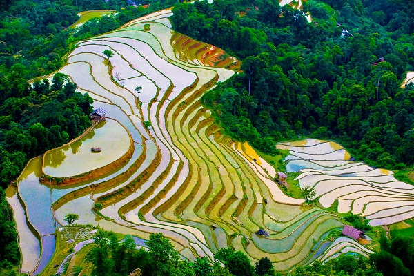 A paronomic view of Sapa colourful terraced field
