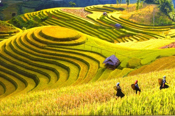 Treeking Sapa is a must-do experience when travelling Vietnam