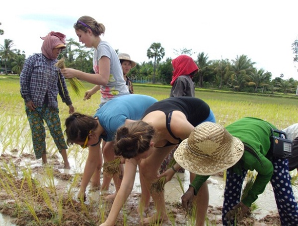 Join villagers and plant rice in the wet season