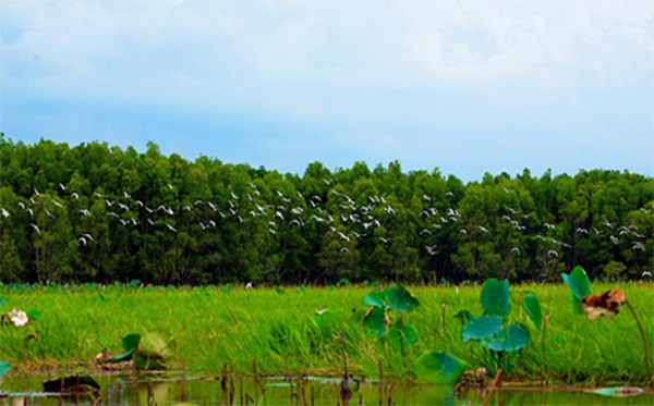 Peaceful scenes of the Mekong Delta's countryside in Bang Lang Stork Garden