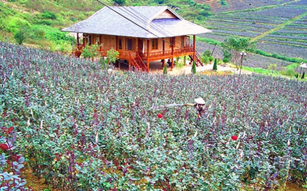Rose Valley - an increasingly attractive destination in Sapa