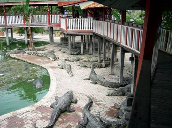 Different areas for varied types of crocodiles