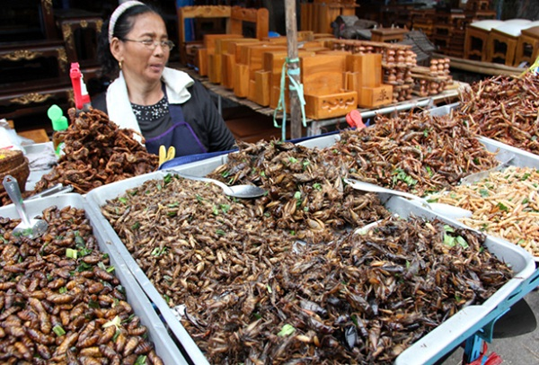 Eating insect is an interesting experience in Thailand