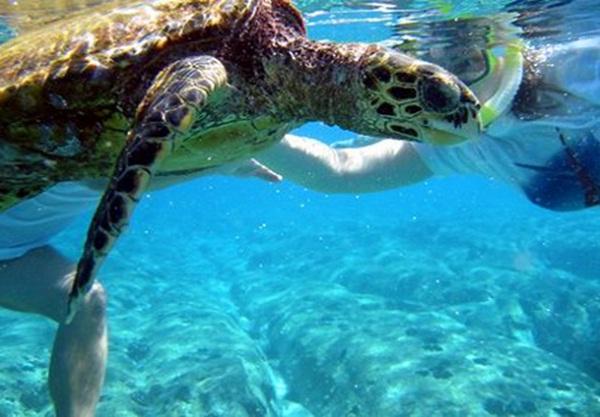Diving at Koh Phayam