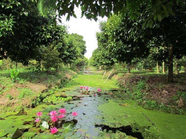 Trung An garden
