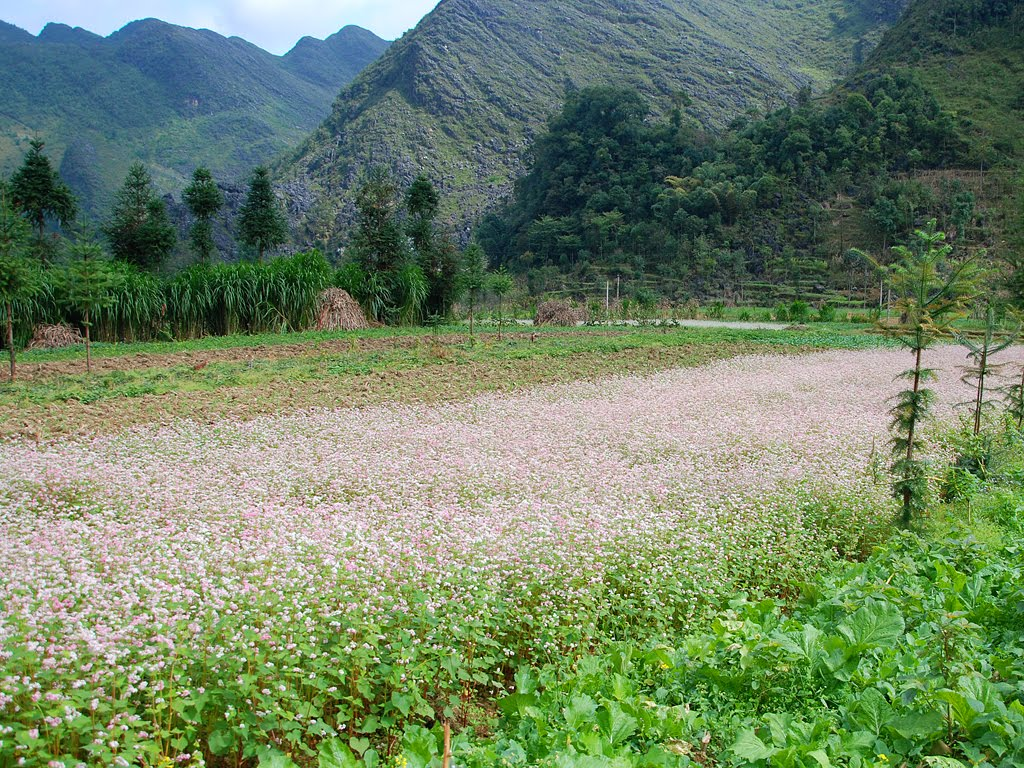 Sung La – one of ideal destinations for you to enjoy the beauty of Ha Giang in October