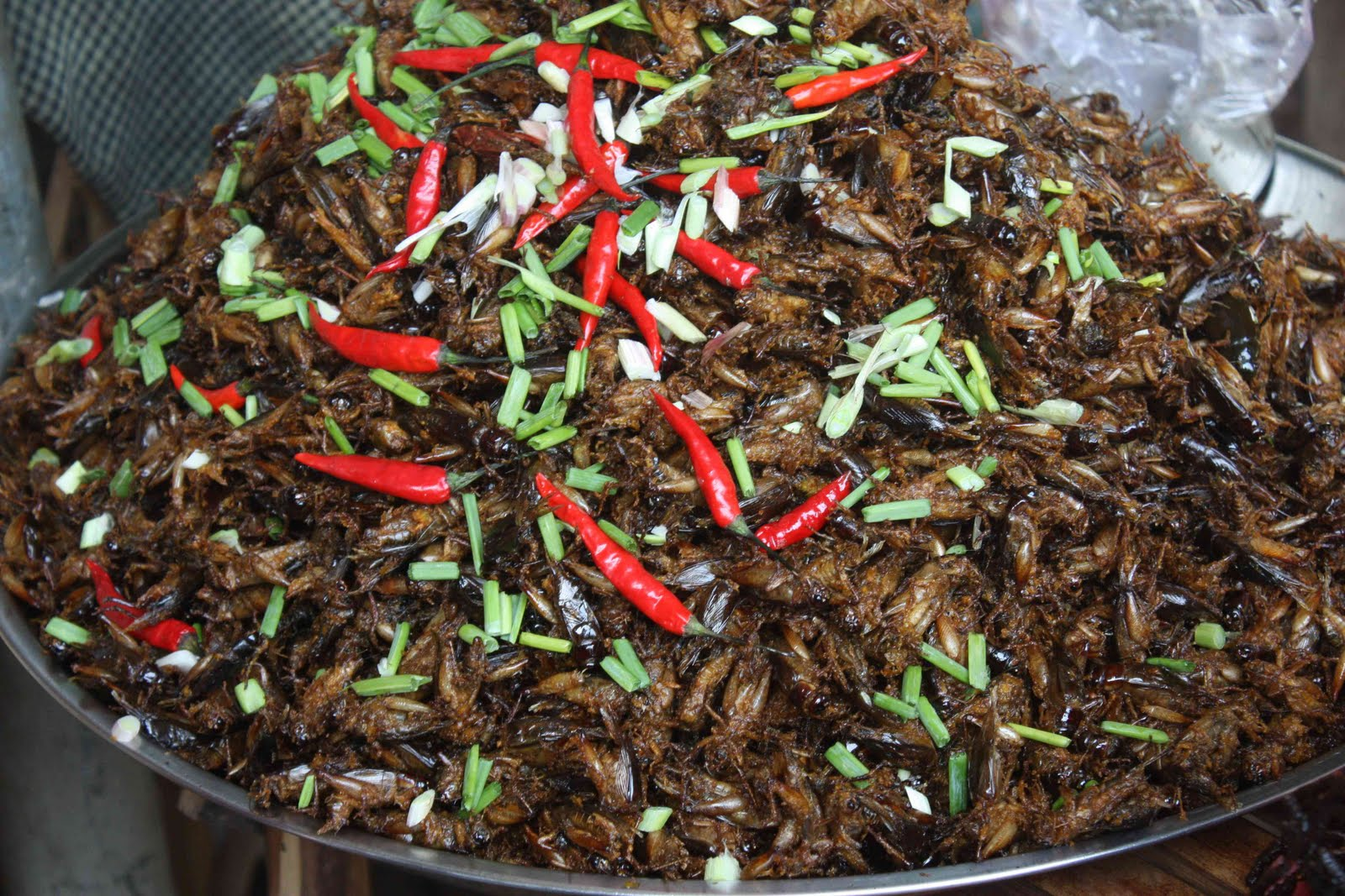 Crickets are fried with chili, a tasty food in Siem Reap's restaurants