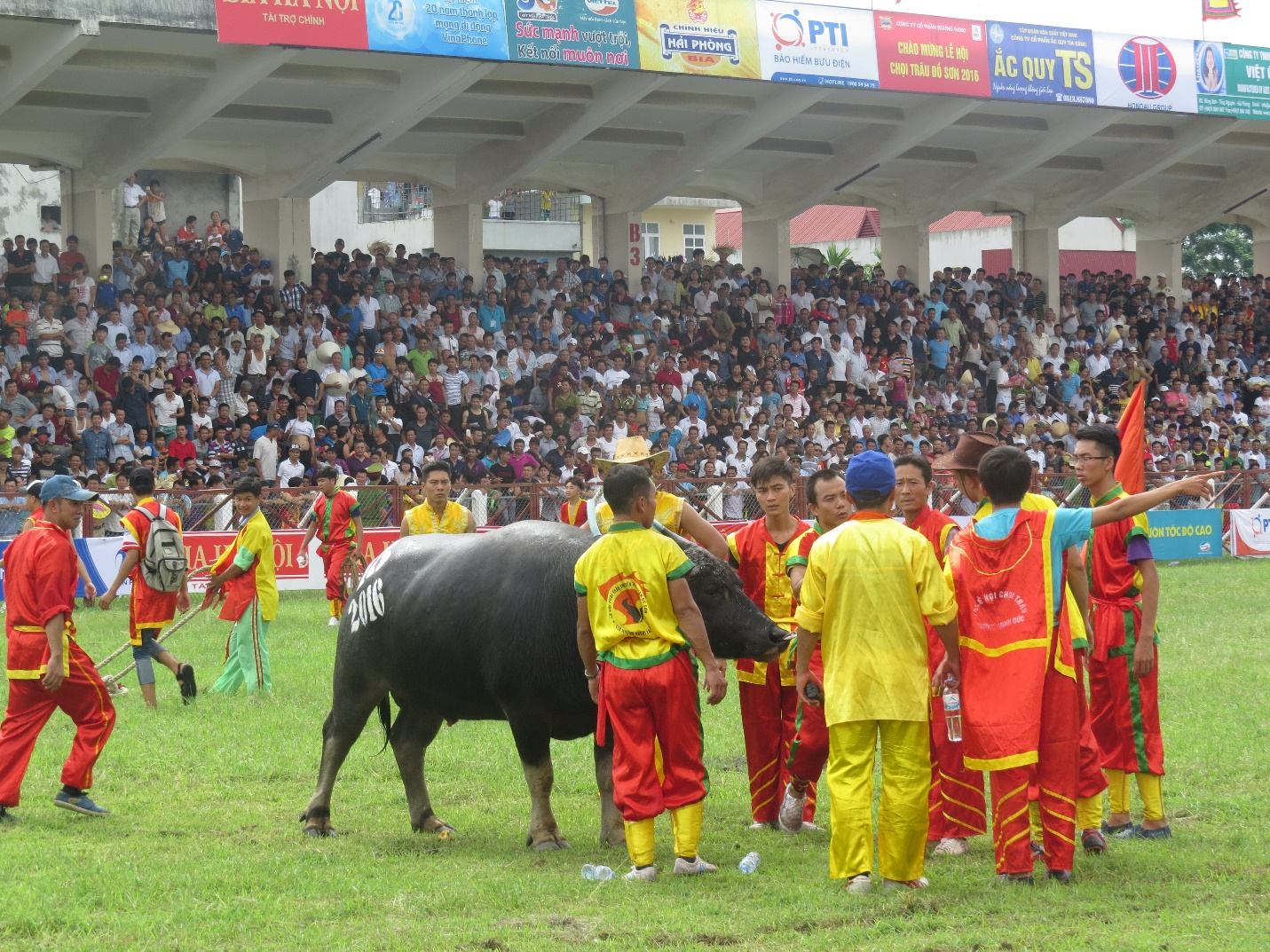 The buffalo appeared in the cheer of the spectators