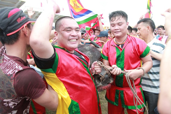 Buffalo fighting in Do Son, Vietnam – not only a competition but also a festival