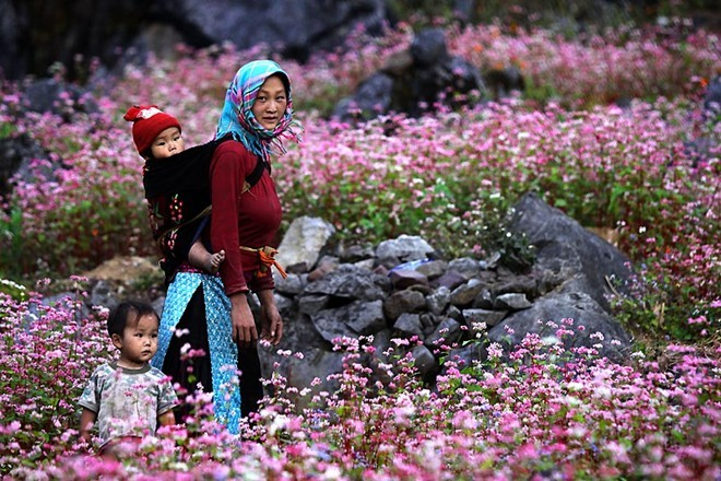 You should ask for permission of the owner before wandering in Triangular flowers flower fields