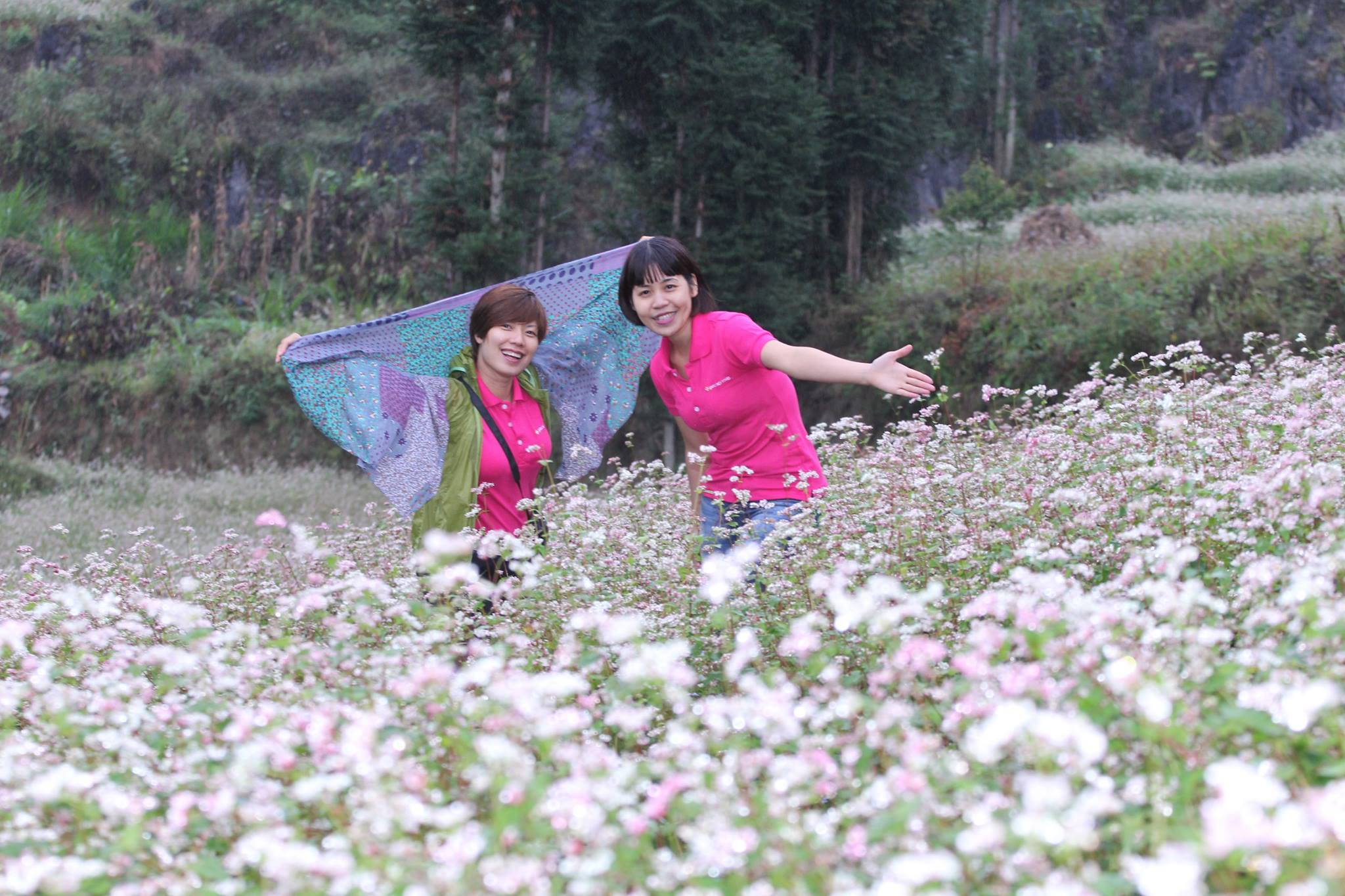 Bucket flowers in Long Luong attracts many tourists every November