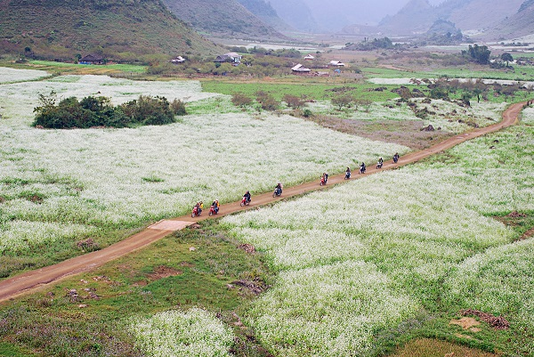 The-beauty-of-bucket-flower-fields-in-Moc-Chau-in-November