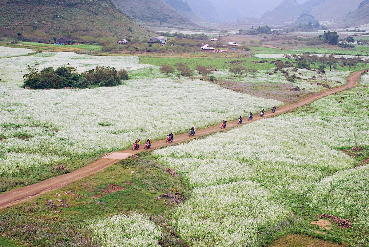 The beauty of bucket flower fields in Moc Chau in November