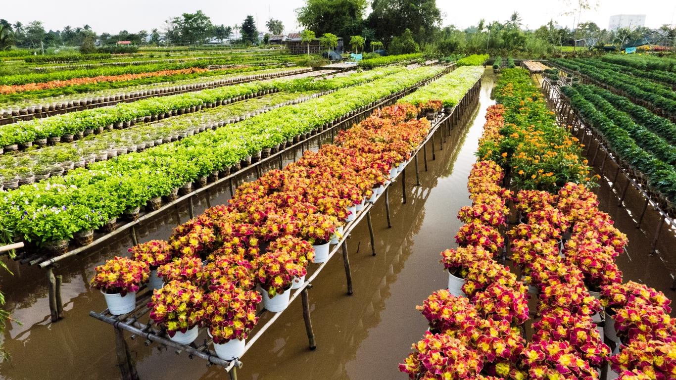 Sa Dec flower village is a wonderful destination in Vietnam in January
