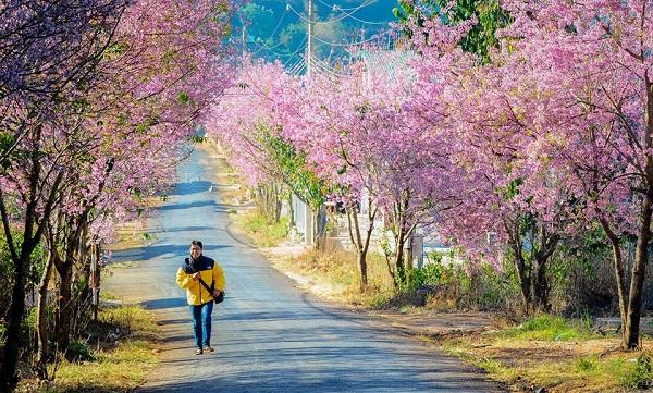 Dalat-in-spring