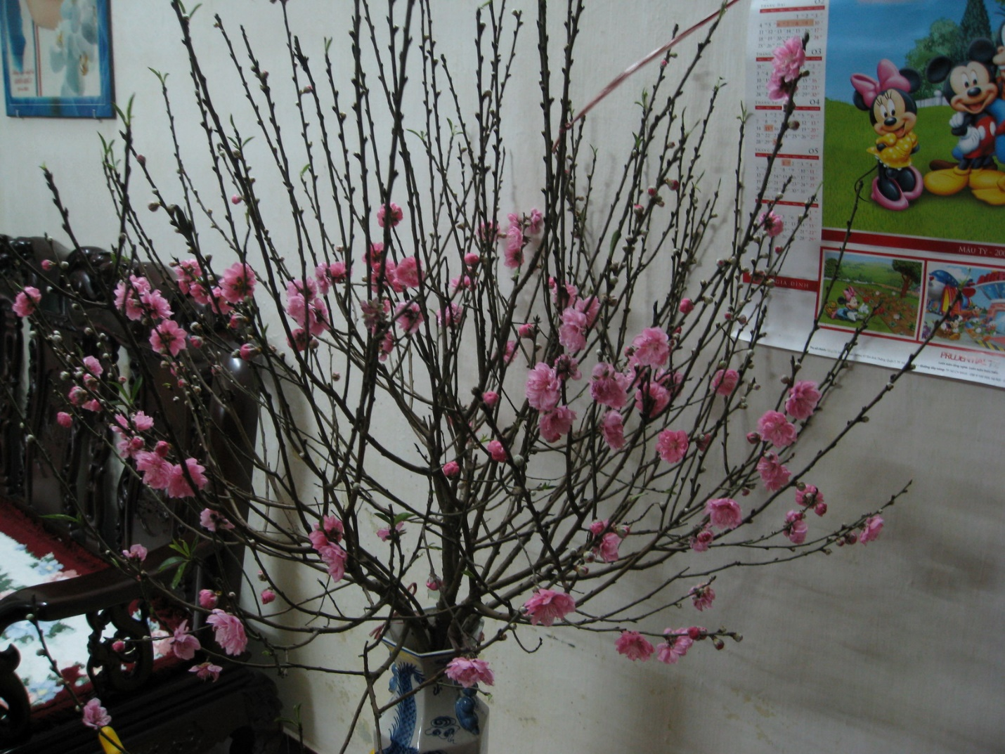 Peach blossom is put in the living room at Tet holiday