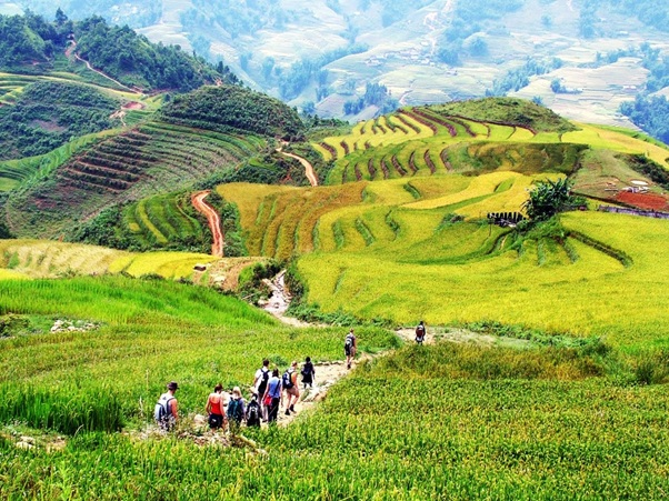 Sapa medium trekking