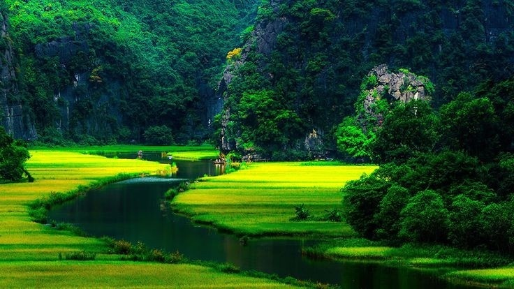 Green color picture created by green rice fields