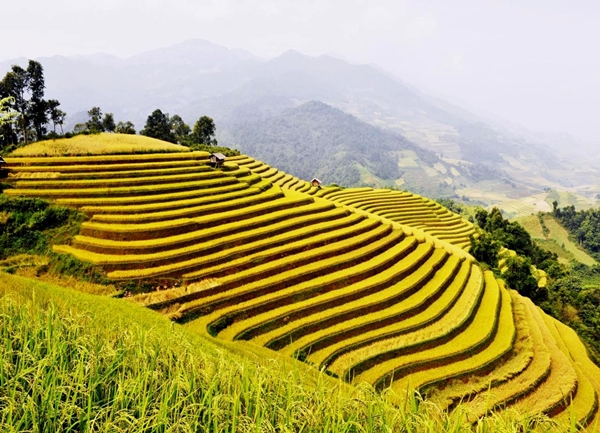 You shouldn't miss harvest rice filed on terraces in Chieng An