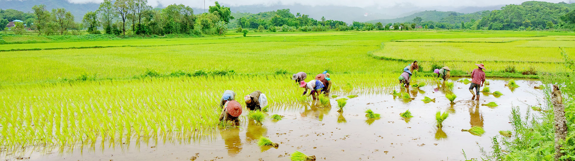 Myanmar – the heaven of tropical fruits