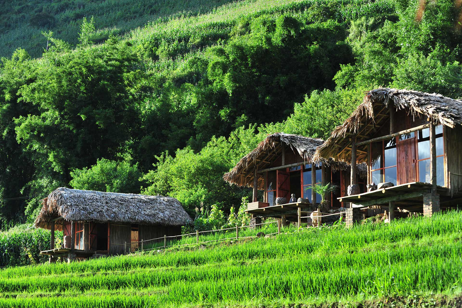Green space around Eco Palms House in Sapa