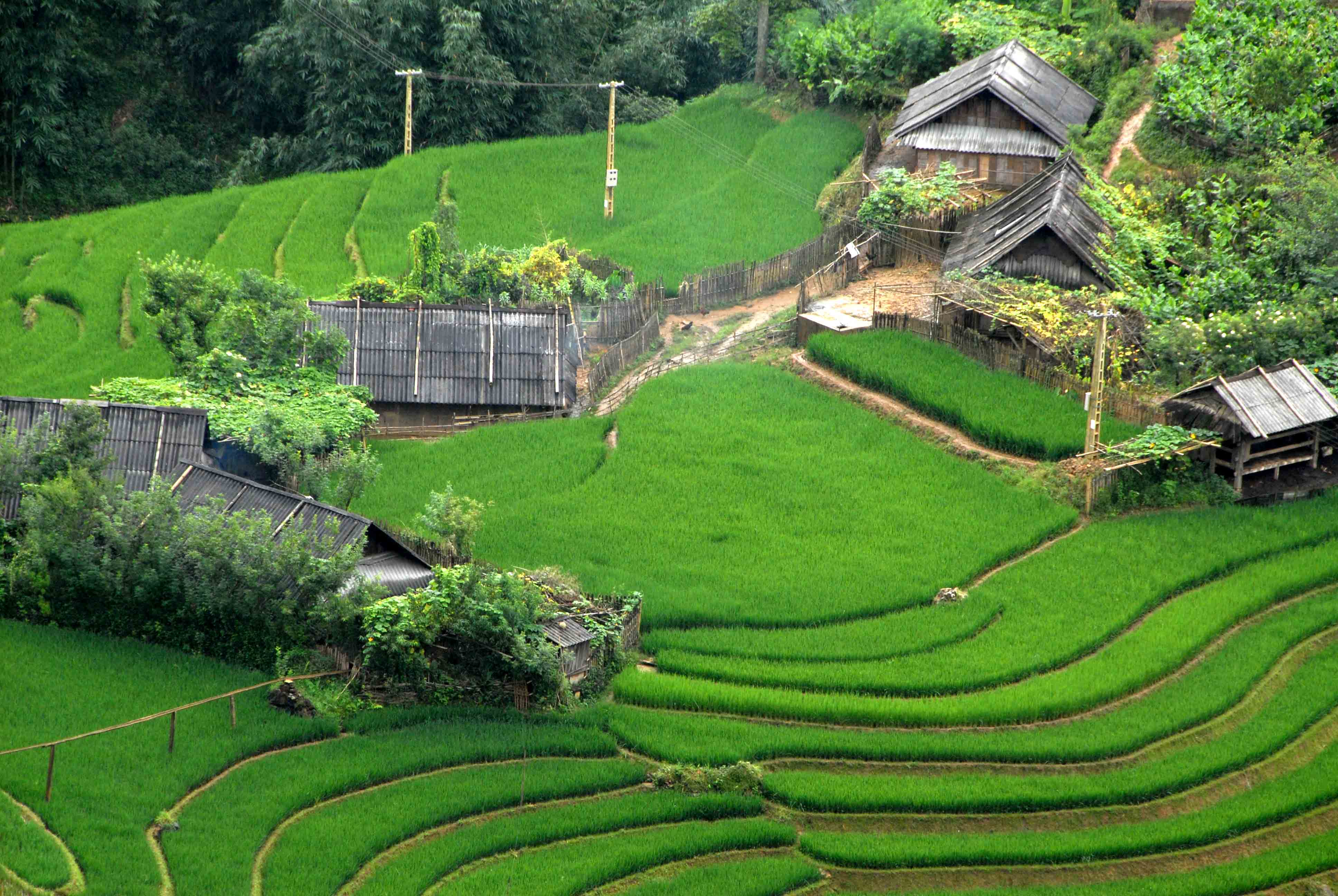 Homestays in Sapa are wonderful accommodations for you