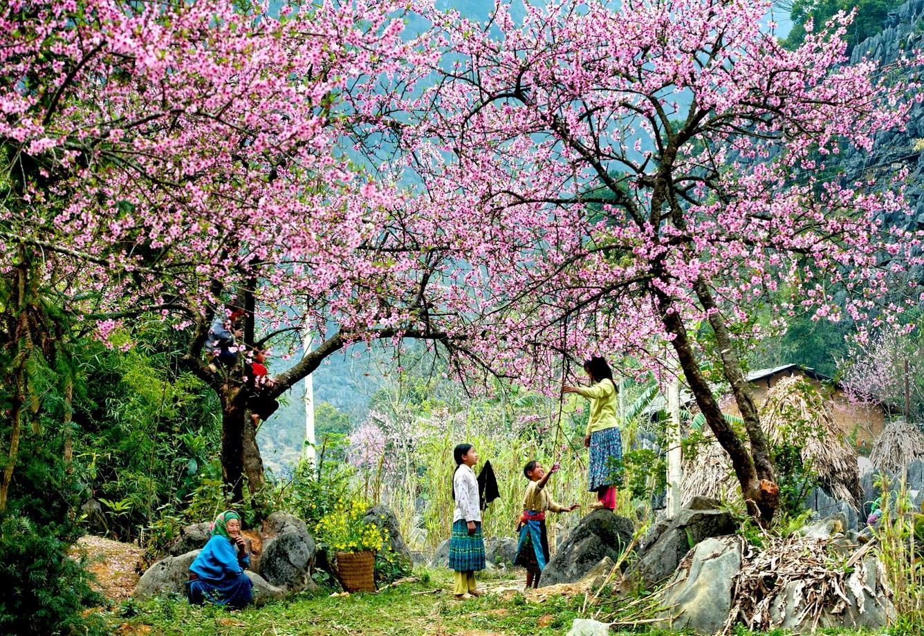 In spring, Sapa is full of beautiful flowers