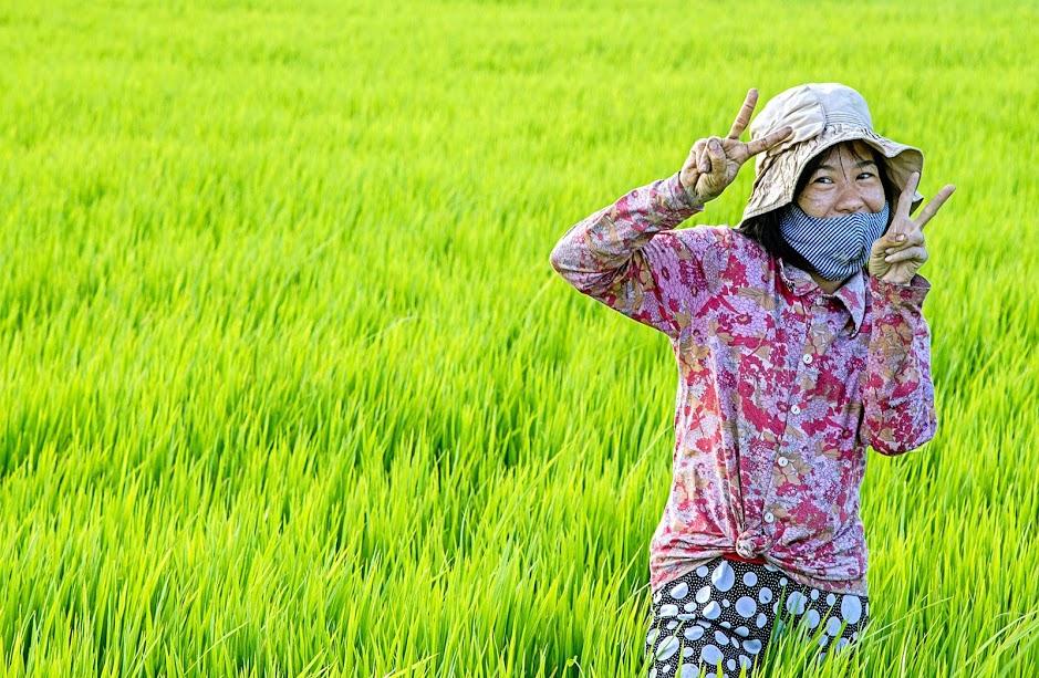 Local-in-Hanoi