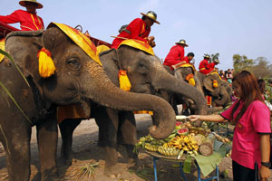 The Elephant Journey 11D – 10N