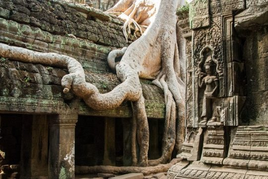 Ta Prohm temple: Where you should travel