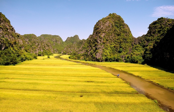 A breathtaking scene of golden rice field in harvest season