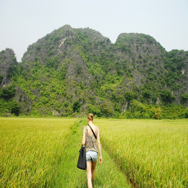 Tourists walk through the paddy fileds in Tam Coc