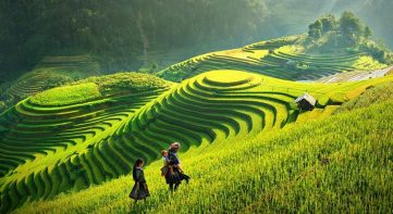 Impressive terraced field in Sapa