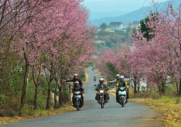 Everywhere-in-Dalat-is-filled-by-the-color-of-flowers