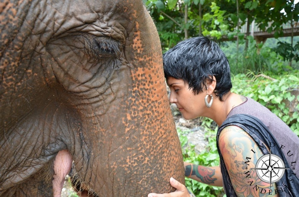Feeding elephants in Chiang Mai