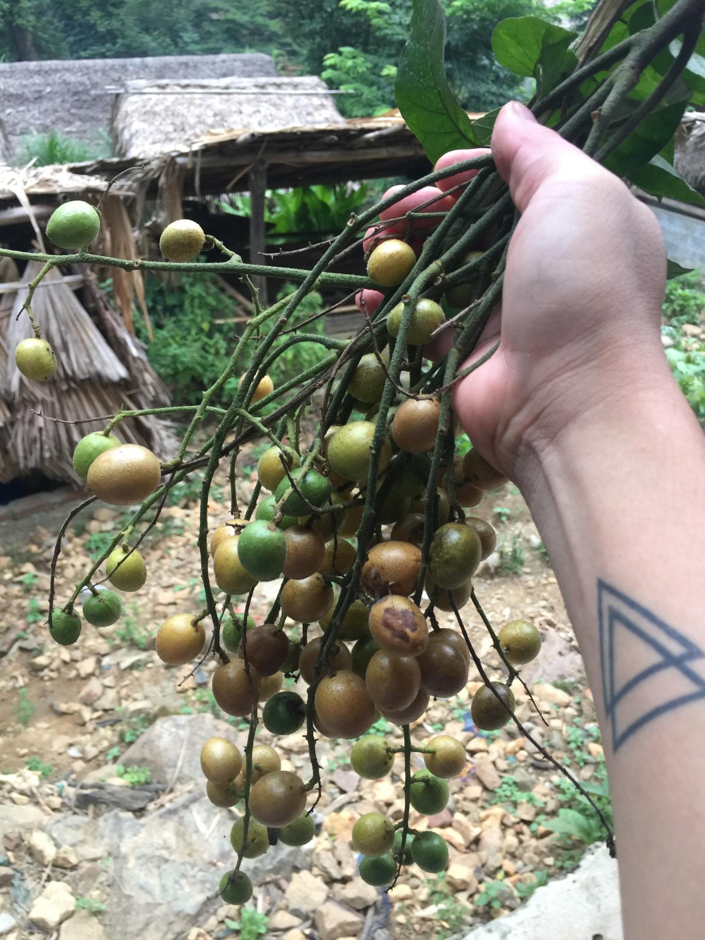 Fruit in Da Bac