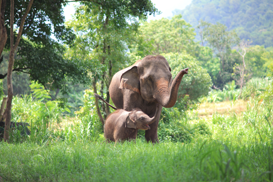 Meet elephant in their wild habitat