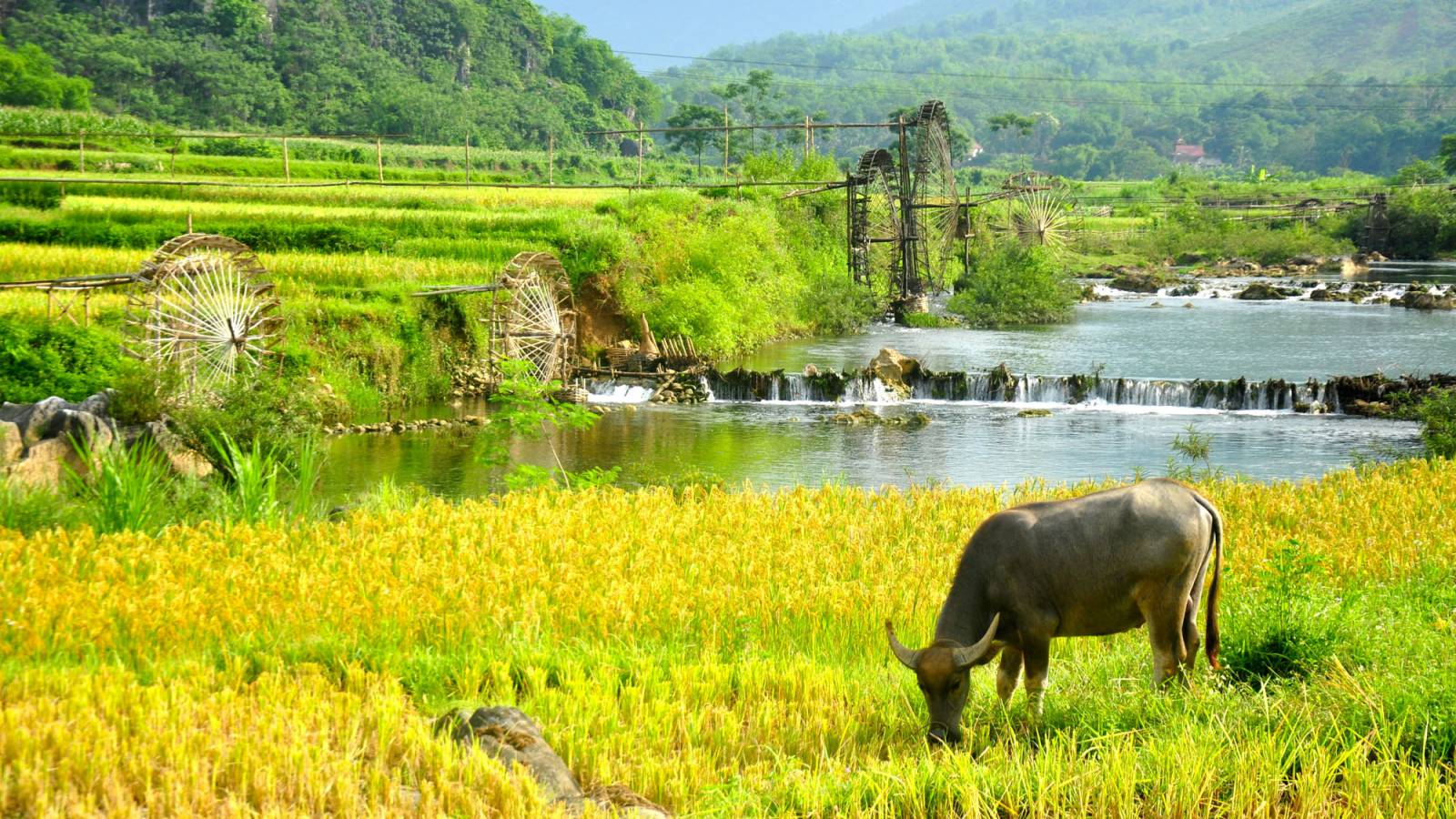 Pu Luong – A hidden gem of Northern Vietnam