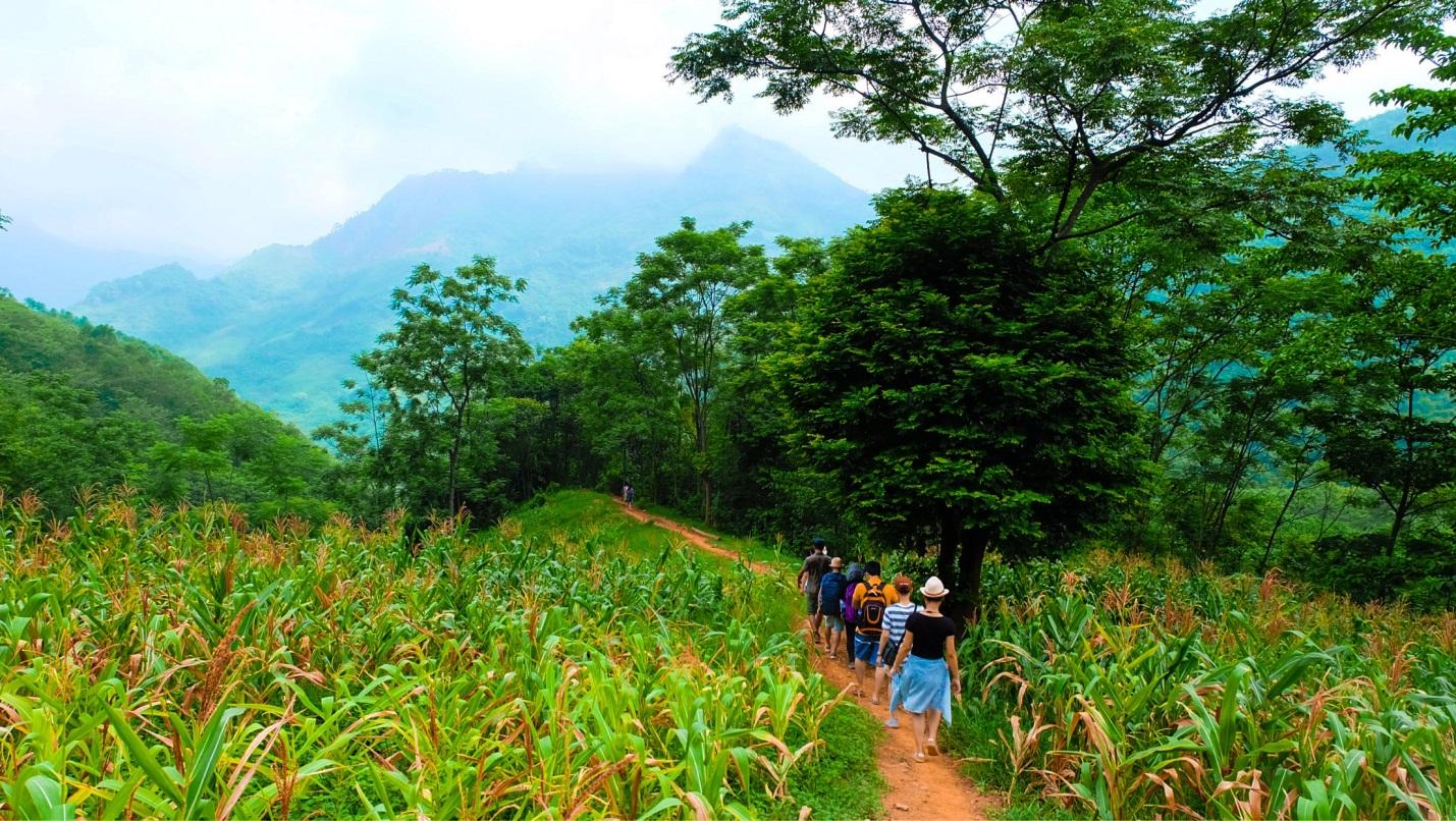 We trek through a village of Muong people and through the mountains, corn fields, and green forests