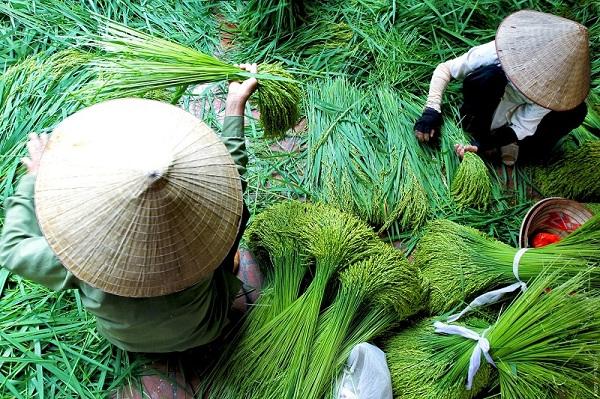 Street Food Fever – green sticky rice in Hanoi
