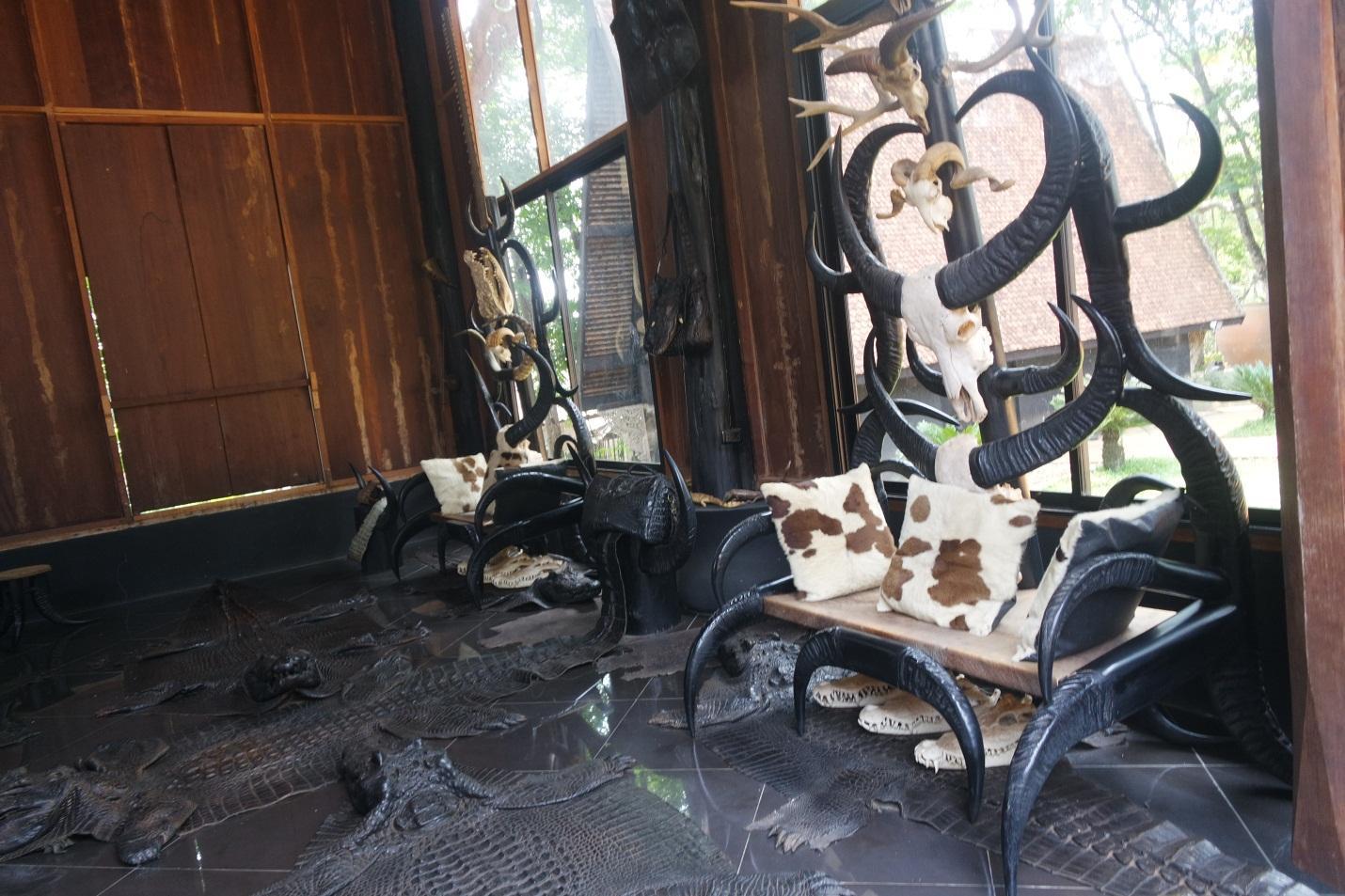 Furniture made from buffalo skulls & horns, cow fur