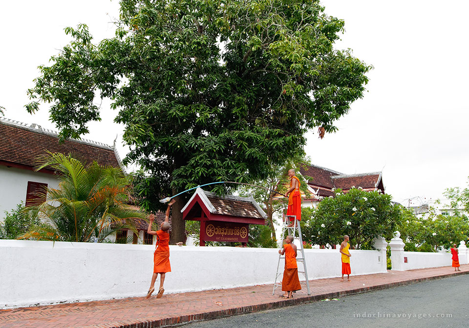 The-monks-in-Luang-Prabang